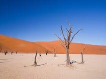 Dead trees in Dead Vlei, Namibia. Dead Camelthorn (Acacia erioloba) Trees in Dead Vlei, Namib-Naukluft National Park, Namibia Stock Photos
