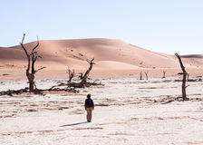 Dead trees in Dead Vlei, Namibia Royalty Free Stock Images