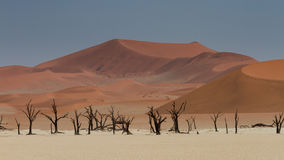 Dead trees at the Dead Vlei salt pan. Namibia, Africa Stock Photo