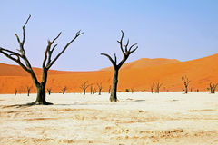 Dead trees in dead vlei Stock Images