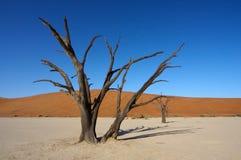 Dead trees of Deadvlei. Dead trees in the Deadvlei lime pan in the Namib desert in Namibia stock photos