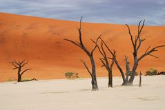 Dead trees. Deadvlei, Sossusvlei, Namib-Naukluft Park. Deadvlei is a white clay pan located near the more famous salt pan of Sossusvlei, inside the Namib Royalty Free Stock Image