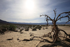 Dead trees in the death valley, california Stock Photo