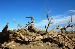 Dead trees in the desert Stock Photo