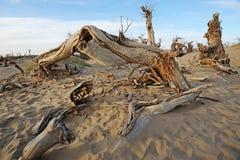 Dead trees in desert Stock Photo