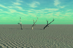 Dead Trees and Desert. A very desolate scene of desert and dead trees Stock Photo
