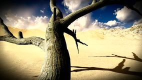 Dead trees in desert stock video footage
