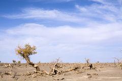Dead Trees in the desert Royalty Free Stock Photography