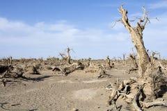 Dead Trees in the desert Stock Images