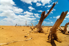 Dead Trees in a Desert Wasteland Royalty Free Stock Photo