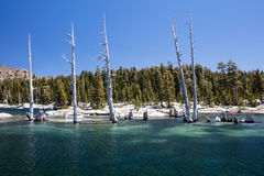 Dead Trees in Desolation Wilderness in Eastern California Stock Photos