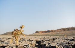 Dead Trees in the a dried up empty reservoir or dam during a summer heatwave, low rainfall and drought in north karnataka,India.  royalty free stock image