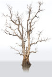Dead trees and dry. Royalty Free Stock Photography