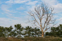 Dead trees and dry grass. Royalty Free Stock Photography