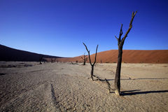 Dead trees  in the dry lake Sossusvlei, Namibia Royalty Free Stock Photography