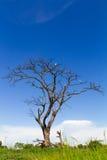 Dead trees dry Stock Photo
