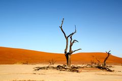 Dead trees and dunes in desert Stock Photos