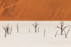 Dead trees and dunes in a salt pan namib desert. The scenic Sossusvlei and Deadvlei. Large clay and salt pan with braided Acacia trees surrounded by majestic Stock Image