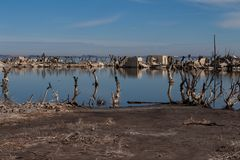 Dead trees in Epecuen. Flood that destroyed the city and left it in ruins. Desolate urban landscape. Ghost city. Dead trees in the abandoned city of Epecuen royalty free stock images