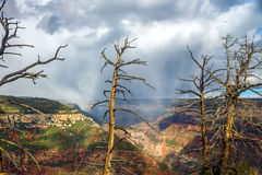Dead Trees In Front of a Rainstorm in a Grand Canyon Valley Royalty Free Stock Photography