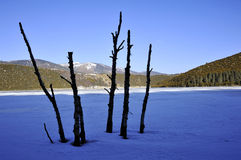 Dead trees and frozen lake Royalty Free Stock Image