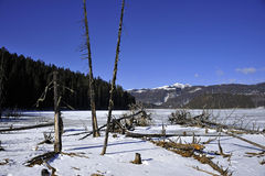 Dead trees and frozen lake Royalty Free Stock Images