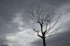 Dead trees gray sky in the evening. Dead trees gray sky in the evening time in cloudy day Royalty Free Stock Photography