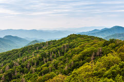 Dead trees in the Great Smoky Mountains National Park. Royalty Free Stock Photo