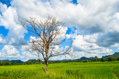 Dead trees. In Green Field Mountains and sky background royalty free stock image