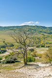 Dead trees on the hillside stock images
