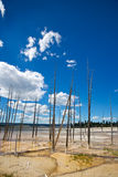 Dead Trees in Hot Spring Stock Photos