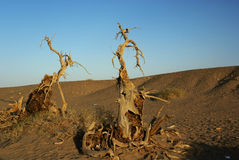 Free Dead Trees In Desert Royalty Free Stock Photos - 16508458