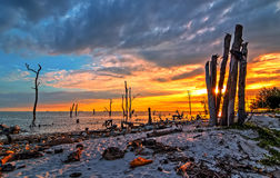 Dead Trees In The Sea At An Eroded Coastal Line At Kelanang Beach Stock Image