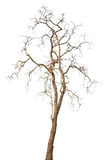 Dead trees isolated Royalty Free Stock Photos