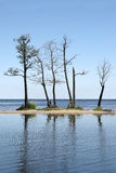 Dead trees in lake stock photography