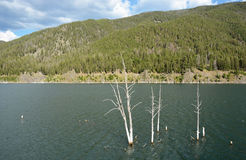 Dead trees in the lake Royalty Free Stock Image
