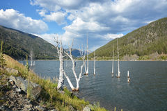 Dead trees in the lake Royalty Free Stock Photography