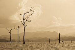 Dead trees in the lake Royalty Free Stock Photos