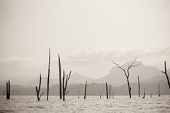Dead trees in the lake Stock Photography