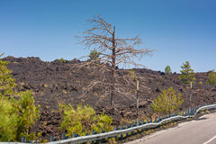 Dead trees and a lava flow near volcano Etna on Sicily Stock Images