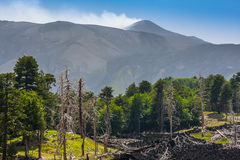 Dead trees and a lava flow near volcano Etna on Sicily Stock Photos