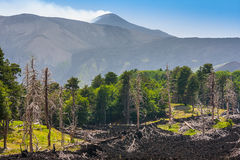 Dead trees and a lava flow near volcano Etna on Sicily Stock Image