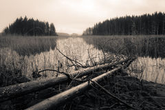 Dead trees lying on a shore, sepia toned lake Royalty Free Stock Image