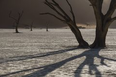 Dead trees in the middle of the namibia desert. Surrounded by dunes Stock Image