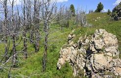 Dead trees on mountain top Tiyahta Royalty Free Stock Photo