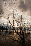 Dead trees and muddy beach at sunset Royalty Free Stock Photo