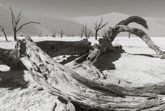 Dead trees in the Namib Desert Stock Images