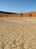 Dead trees in Namibian desert. Dead trees in Deadvlei in the Namibian desert in Africa Royalty Free Stock Photo