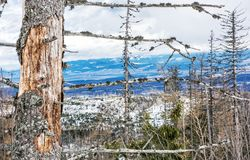 Dead trees after a natural disaster in High Tatras mountains, Sl Royalty Free Stock Photography