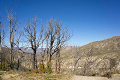 Dead Trees over Valley Royalty Free Stock Photography